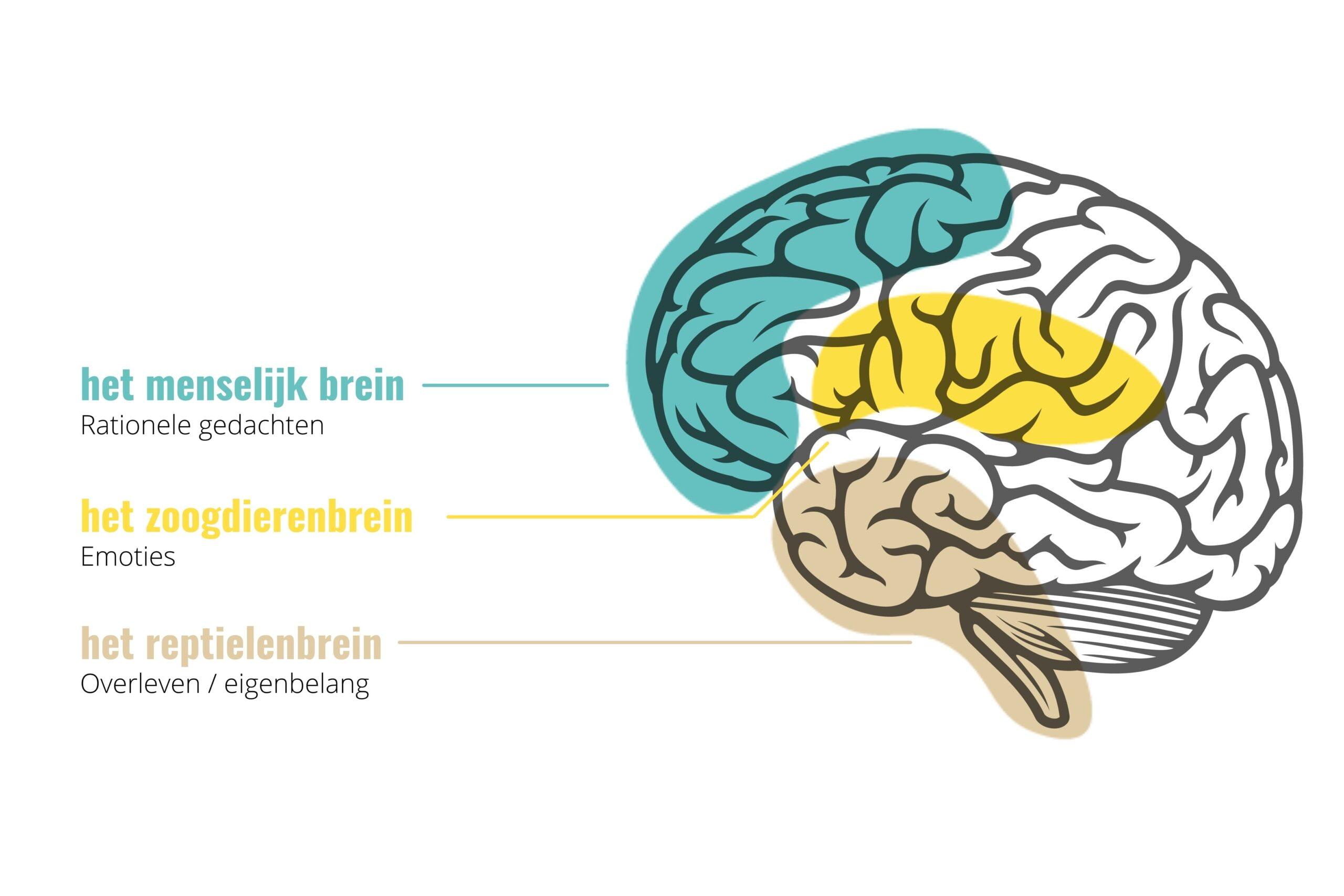 the fully bookers menselijk brein